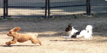 我が家の2匹は異様に走るのが好き。