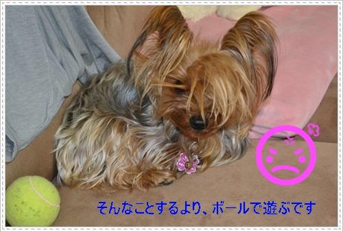 DSC_1101_20130202115122.jpg