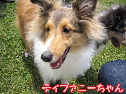 100516146ティファニーちゃん