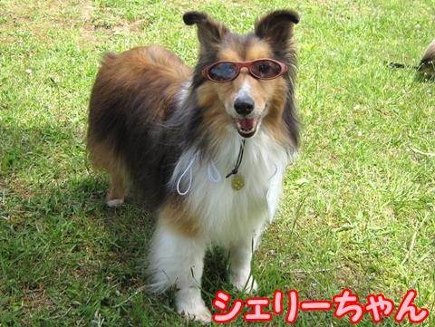 100516194シェリーちゃん