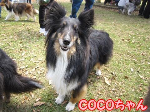 100516274COCOちゃん