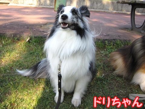 100516463ドリちゃん