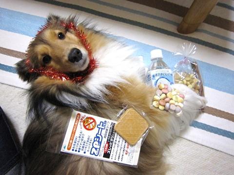 100515犬茶屋本舗さんから♪