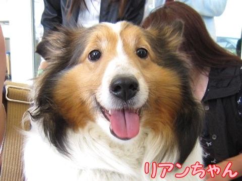 rian-chang!.jpg