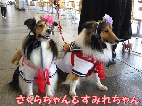 sakura-sumire-chang.jpg