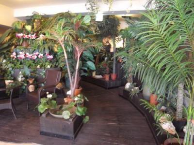 ジャングルスペース