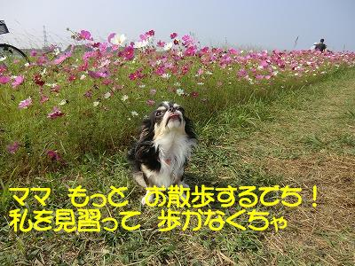 CIMG0353_20111012111723.jpg