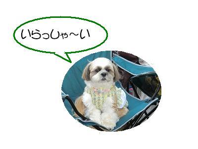 CIMG0424_20110605222003.jpg