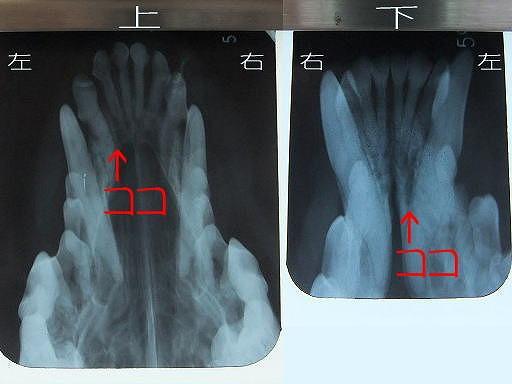20100630-2.jpg