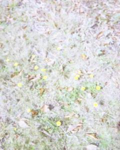 200911103-5.jpg