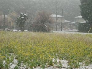20100309-1.jpg