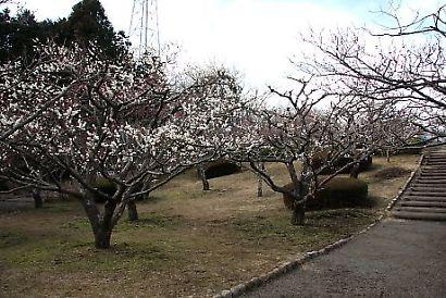 岩本山公園-1