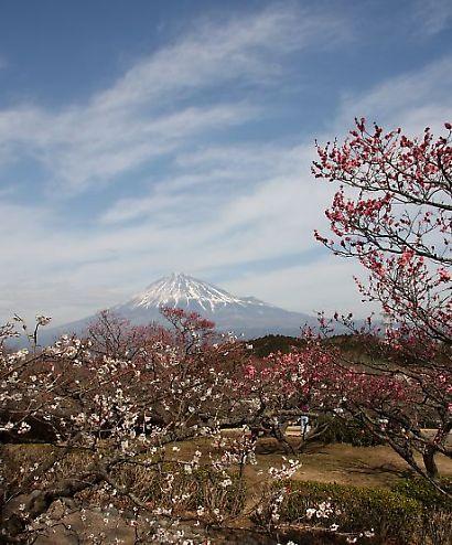 岩本山公園-3