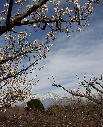 岩本山公園-6