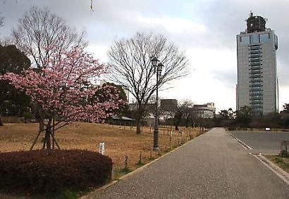 駿府公園伊東小室桜-1