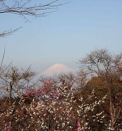 日本平梅園-5