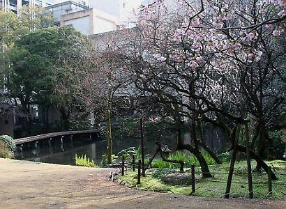 浮月桜(桜)-3