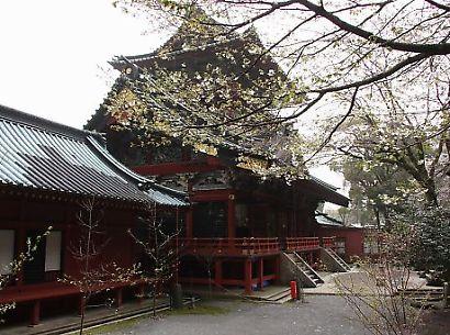 浅間神社の枝垂れ桜-2