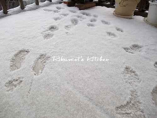 DSCF1・13雪2