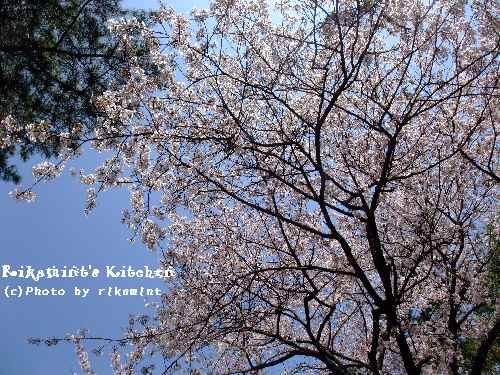 DSCF桜4