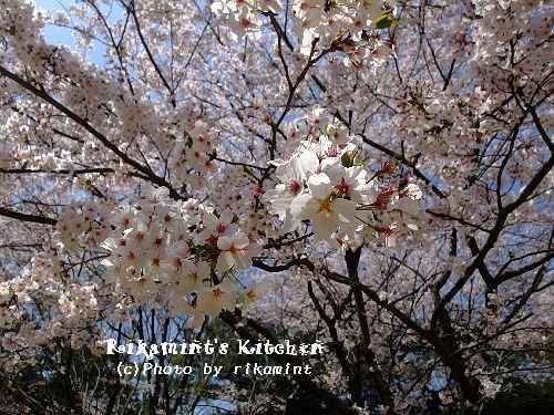 DSCF桜3