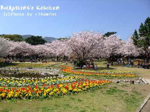 DSCF別府公園3