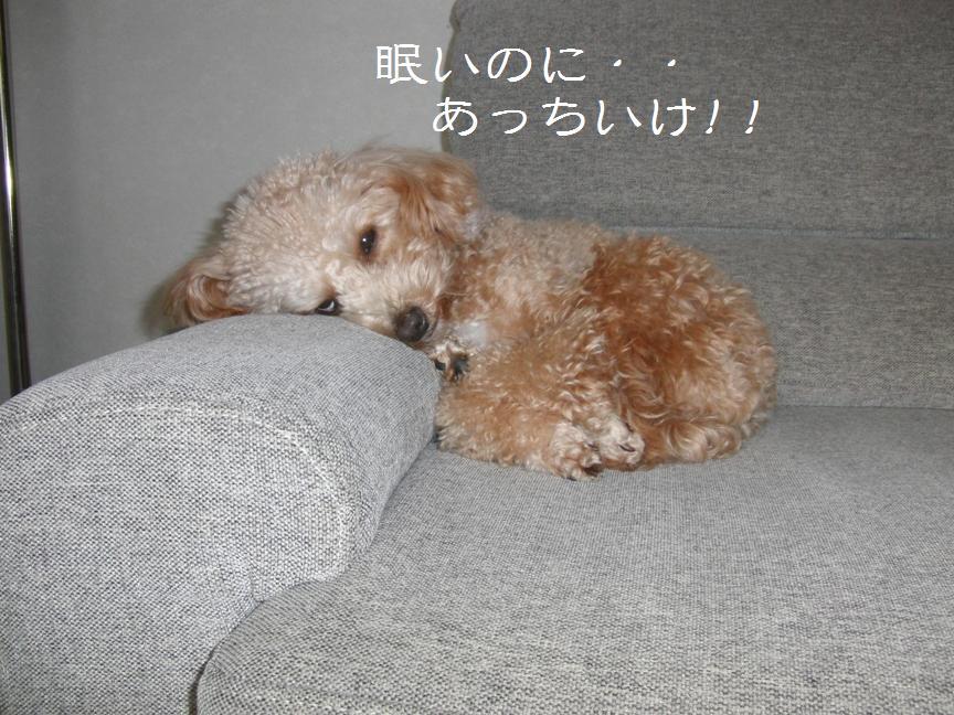 001_20120113132745.jpg