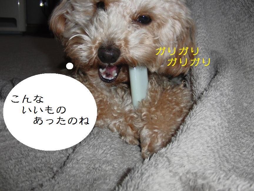 019_20120206124035.jpg