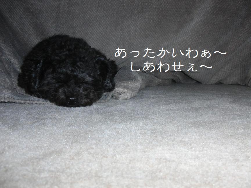 028_20120203131853.jpg