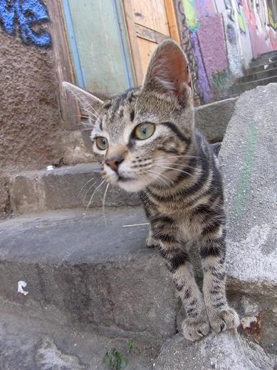cat in val