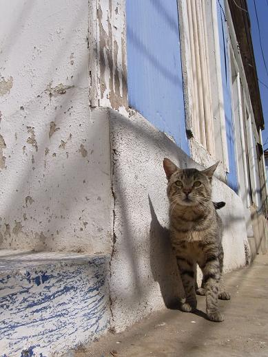 cat along the wall