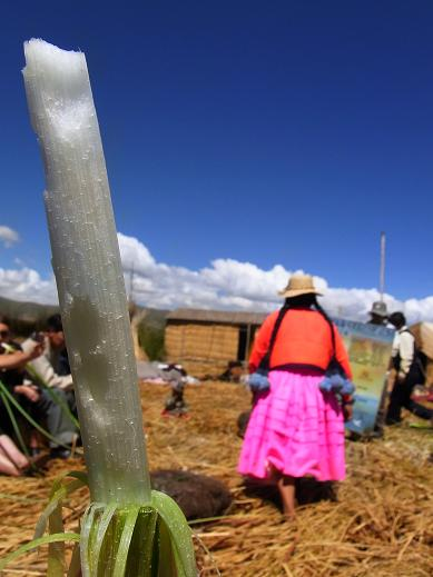 totora and a lady