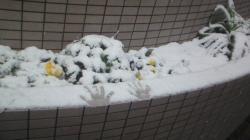 snow1_convert_20110212000028.jpg