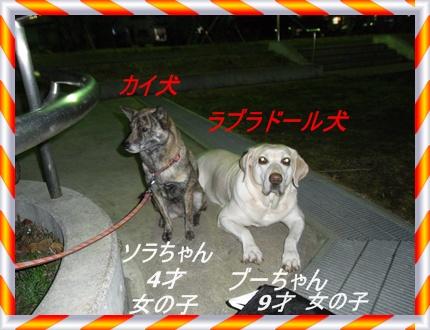 RIMG6361.jpg