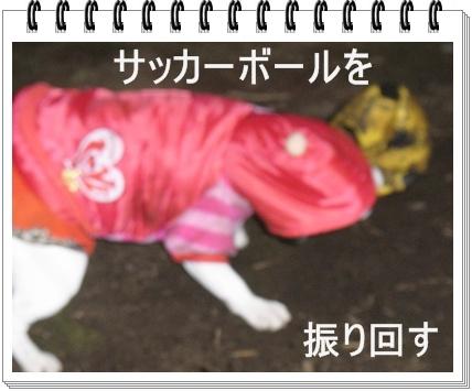 RIMG6746.jpg