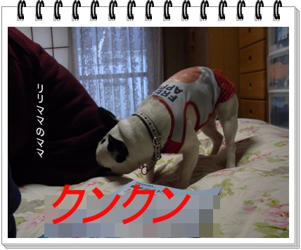 RIMG6897.jpg