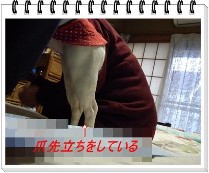 RIMG6909.jpg