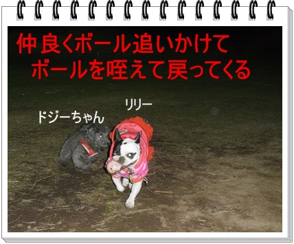 RIMG6970.jpg