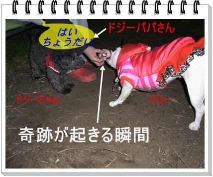 RIMG6972_20110109230236.jpg