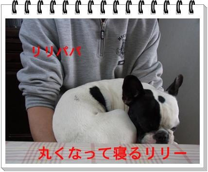 RIMG7685.jpg