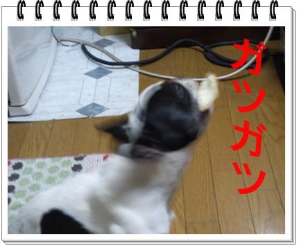RIMG8081.jpg