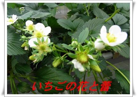 RIMG8426.jpg