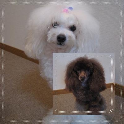 癒し犬 1