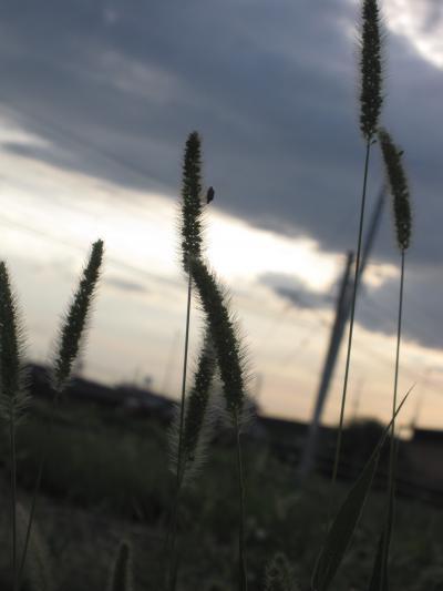 20100914秋