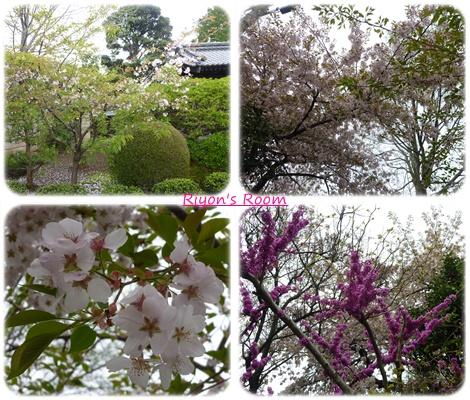 花見散歩④