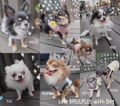 dogcafebasil-2.jpg