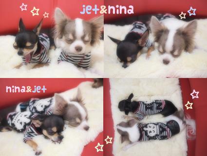jetnina-1.jpg