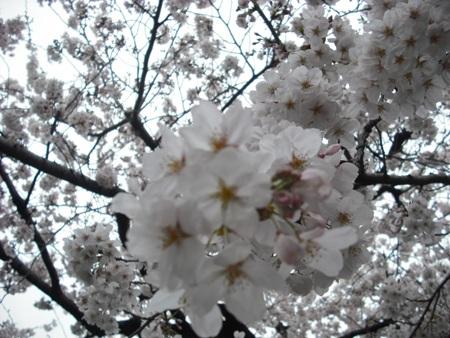 2010_0402_143233-DSCF0031.jpg
