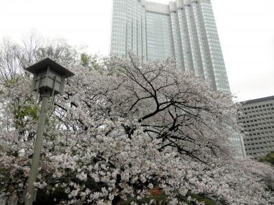 赤プリ桜100407