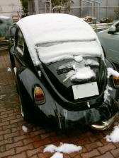 snowbeetle.jpg